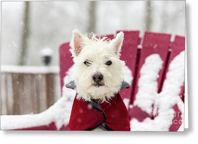 Small Dog In Snow Storm Greeting Card by Edward Fielding