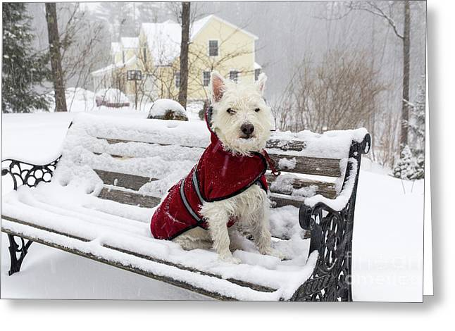 Small Dog Park Bench Snow Storm Greeting Card