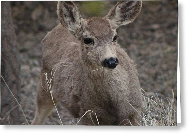Small Fawn In Tombstone Greeting Card by Colleen Cornelius