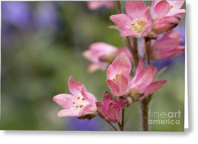 Small Flowers Greeting Card