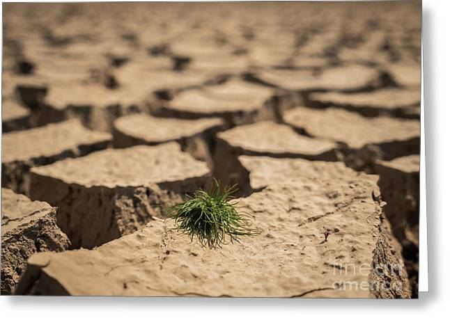 Greeting Card featuring the photograph Small Grass Growth On Dried And Cracked Soil In Arid Season. by Tosporn Preede