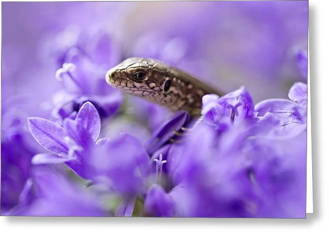 Small Lizard Greeting Card by Jaroslaw Blaminsky