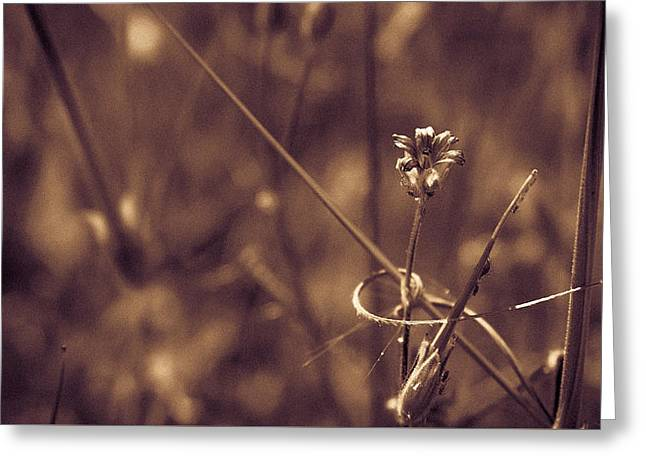 Greeting Card featuring the photograph Small by Lora Lee Chapman