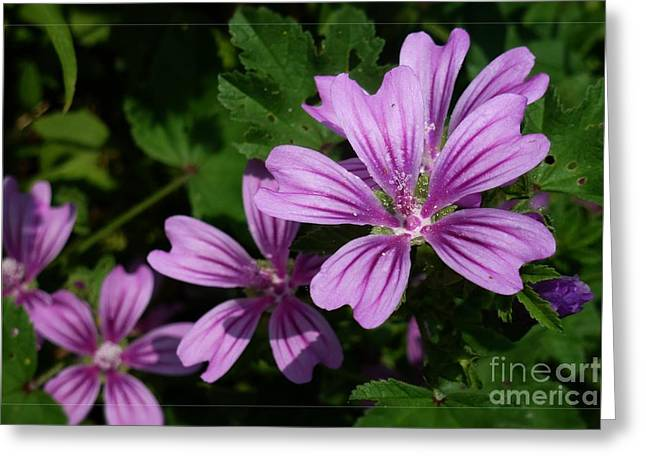 Small Mauve Flowers 6 Greeting Card