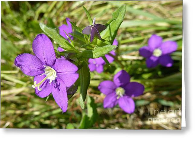 Greeting Card featuring the photograph Small Mauve Flowers by Jean Bernard Roussilhe