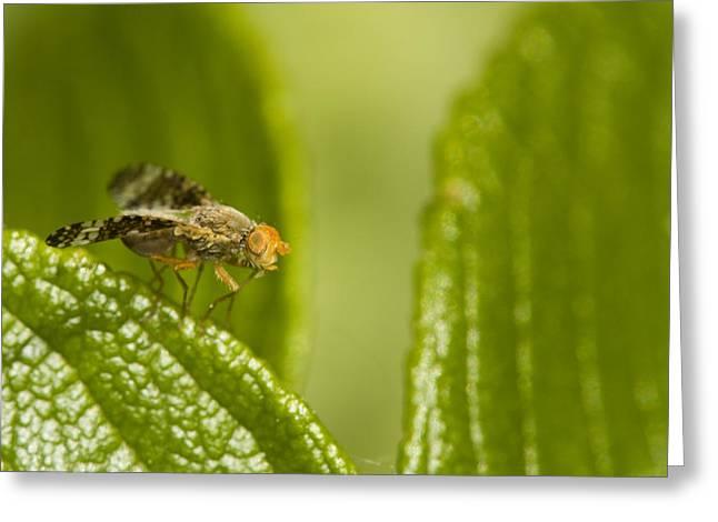 Small Orange Fly Greeting Card by Jouko Mikkola