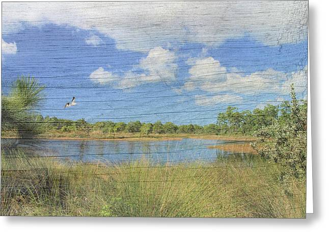 Small Pond With Weathered Wood Greeting Card by Rosalie Scanlon