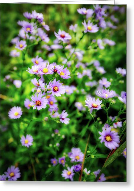 Small Purple Wildflowers Of Wisconsin Greeting Card by Jennifer Rondinelli Reilly - Fine Art Photography