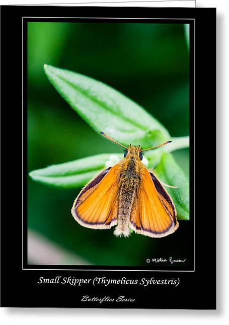 Small Skipper   Thymelicus Sylvestris Greeting Card by Mathias Rousseau