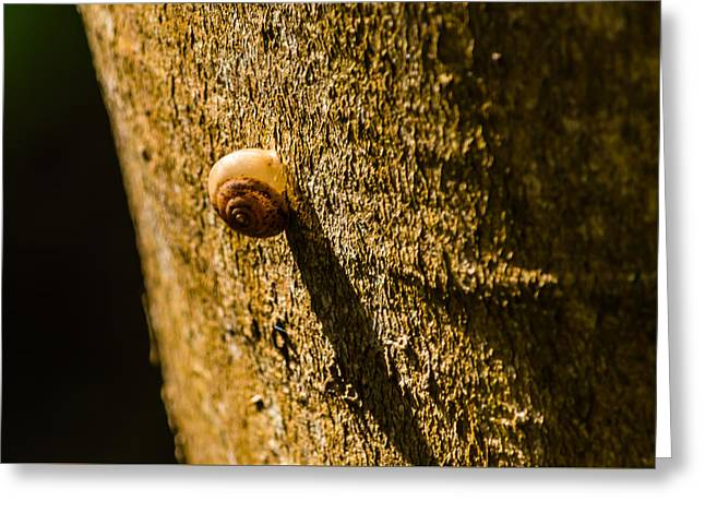 Small Snail On The Tree Greeting Card