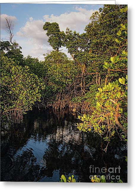 Small Waterway In Vitolo Preserve, Hutchinson Isl  -29151 Greeting Card