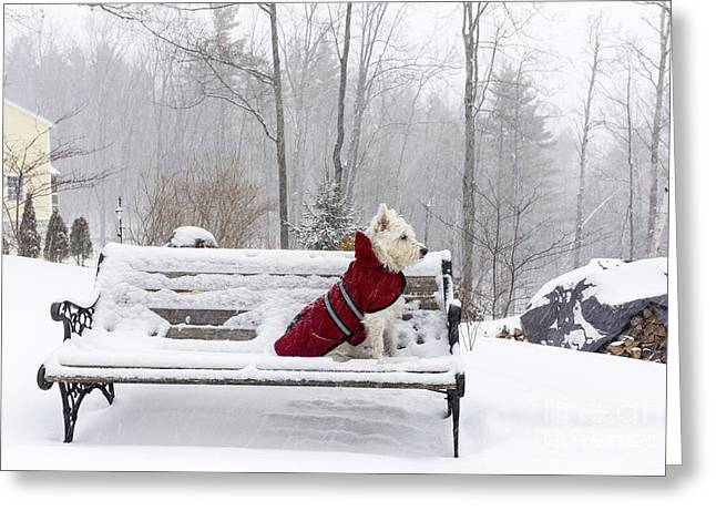 Small White Dog In Snow Storm On Bench Greeting Card