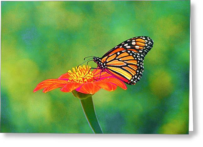 Greeting Card featuring the photograph Small Wonders by Byron Varvarigos