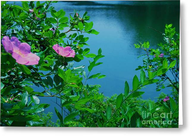 Smell The Roses Greeting Card