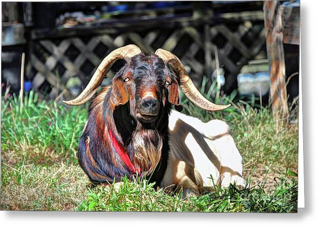 Smelly Old Goat Greeting Card by Savannah Gibbs