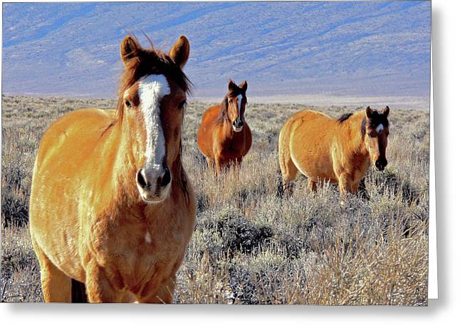 Smile - Mustang Mares Of Eastern Sierra  Greeting Card