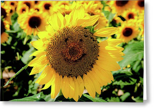 Greeting Card featuring the photograph Smile by Greg Fortier