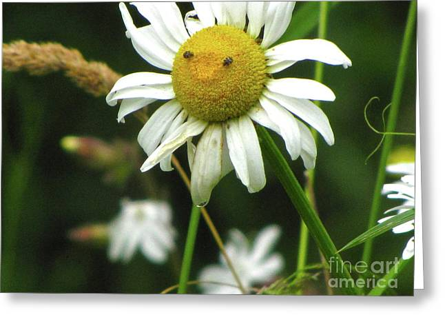 Sean Griffin Greeting Cards - Smiley Face Ox-Nose Daisy Greeting Card by Sean Griffin