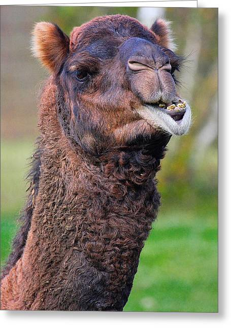 Smiling Camel Greeting Card by Naman Imagery