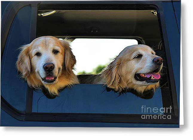Smiling Dogs Greeting Card