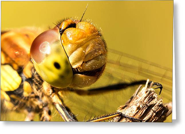 Smiling Dragonfly Greeting Card by Ian Hufton