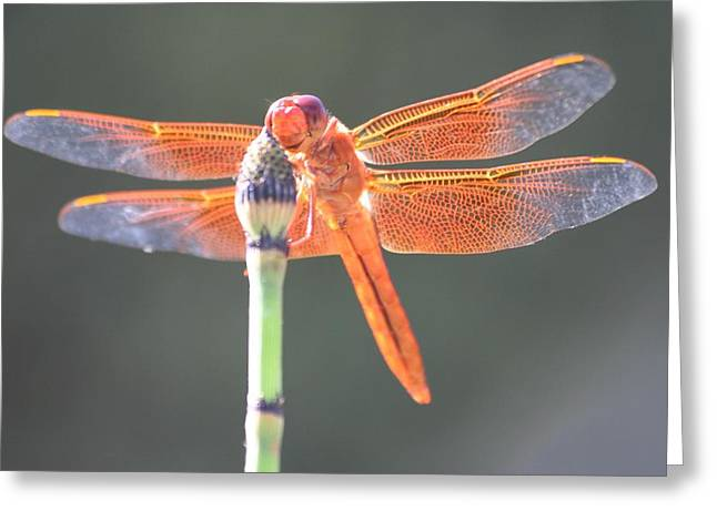 Smiling Dragonfly Greeting Card by Melanie Beasley