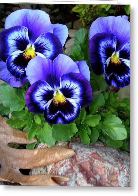 Smiling Faces Of Spring Greeting Card by Randy Rosenberger