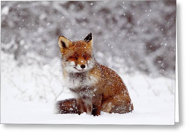 Smiling Fox In A Snow Storm Greeting Card by Roeselien Raimond