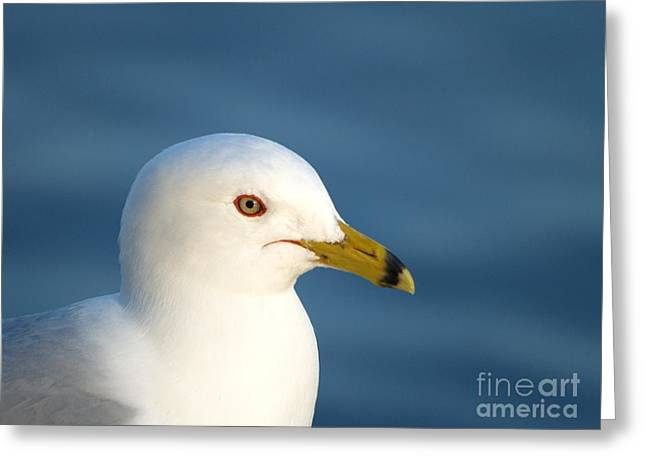 Smiling Seagull Greeting Card