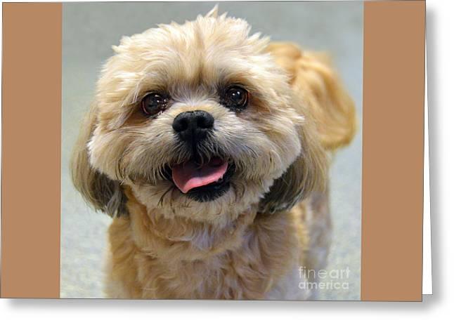 Smiling Shih Tzu Dog Greeting Card