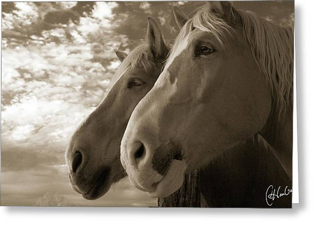Infrared Photography Greeting Cards - Smith and Wesson Greeting Card by Christine Hauber