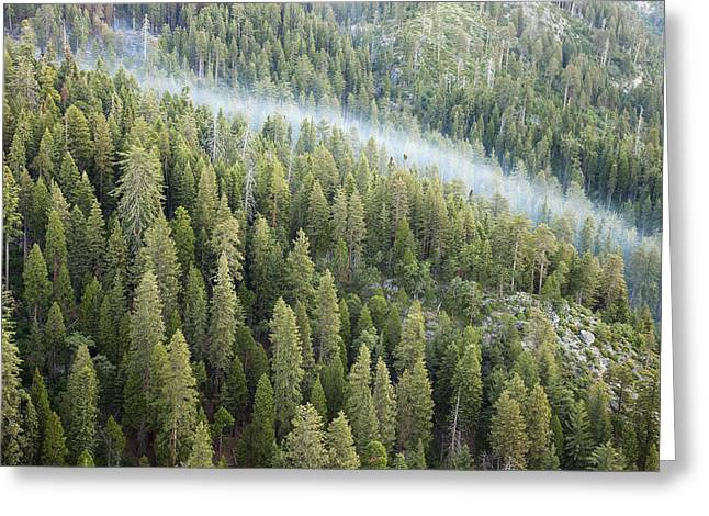 Smoke In Forest Greeting Card by Rick Pham