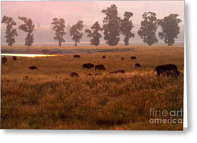 Smoke Over Lamar Valley Greeting Card by Adam Jewell