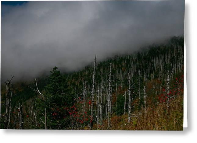 Smokey Mountains Greeting Card by James Jones