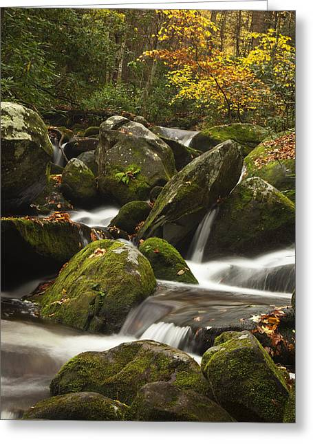 Rapids Photographs Greeting Cards - Smokies Waterfall Greeting Card by Andrew Soundarajan