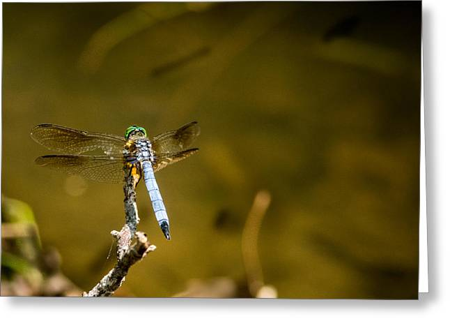 Smoky Dragonfly Perched Greeting Card by Douglas Barnett