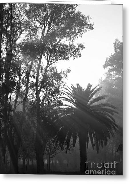 Smoky Morning Trees Greeting Card