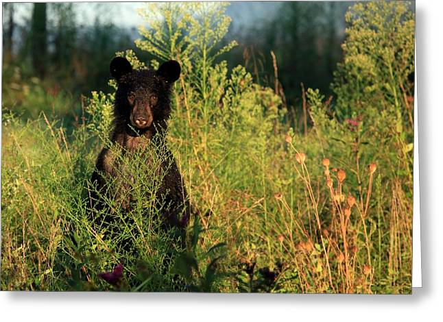 Smoky Mountain Staredown Greeting Card by Doug McPherson
