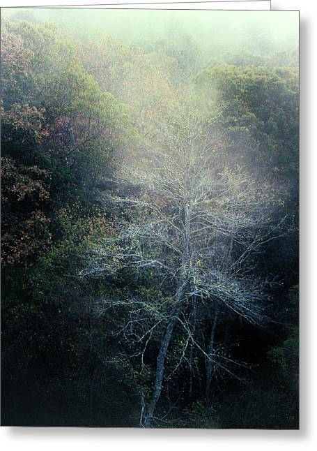 Smoky Mountain Trees Greeting Card