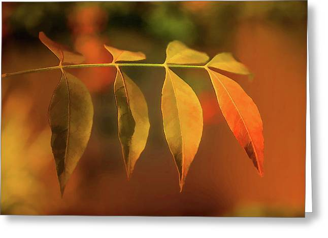 Smooth Autumn Greeting Card by Terry Davis