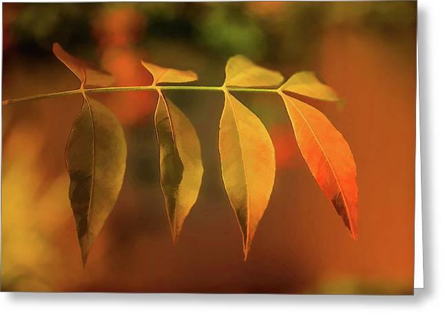 Smooth Autumn Greeting Card