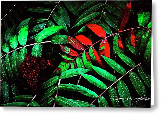 Smooth Sumac Greeting Card by Thomas R Fletcher