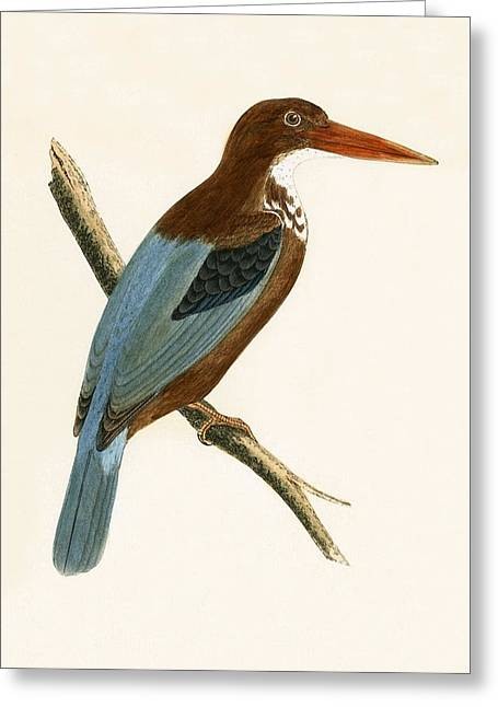 Smyrna Kingfisher Greeting Card by English School