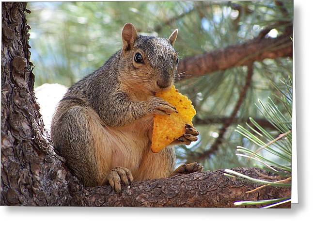 Snack Time Greeting Card by Ernie Echols