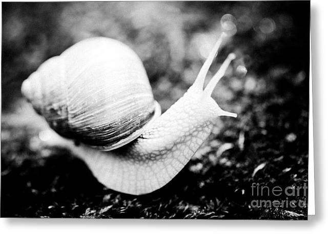 Snail Crawling On The Stone Artmif Greeting Card