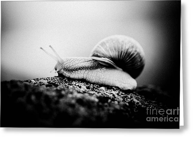 Snail Crawling On The Stone Artmif.lv Greeting Card