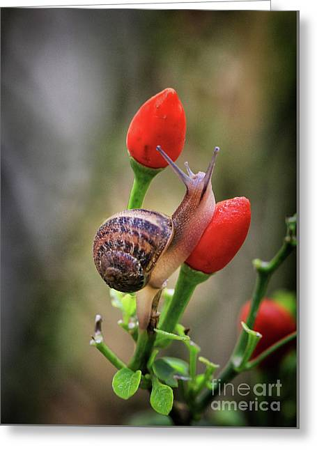 Snail Going To The Next One Greeting Card by Stephan Grixti