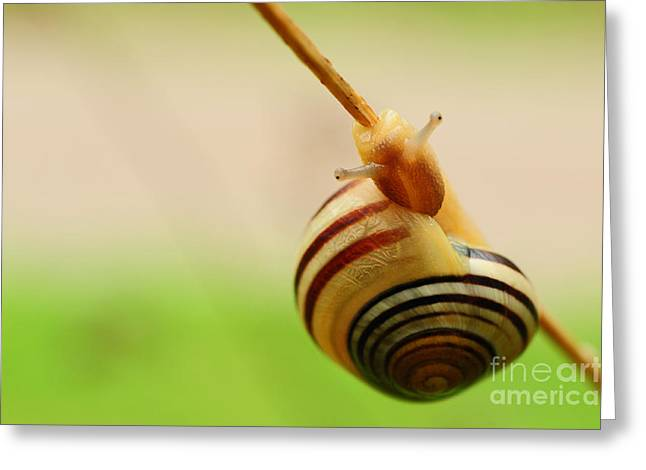 Snail  Greeting Card by Joe  Ng