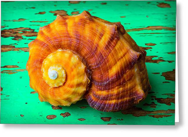 Snail Sea Shell On Green Board Greeting Card by Garry Gay