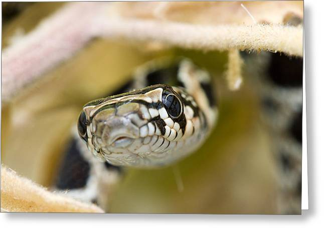 Snake Greeting Card by Andre Goncalves